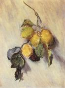 Claude Monet Branch from a Lemon Tree china oil painting reproduction