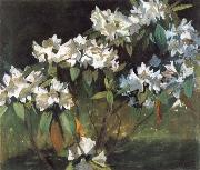 William Stott of Oldham White Rhododendrons china oil painting reproduction