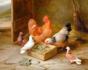 unknow artist Poultry 093 china oil painting reproduction