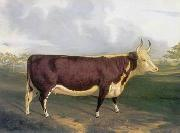 unknow artist Cow 145 china oil painting reproduction