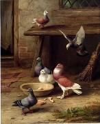 unknow artist Pigeons 194 china oil painting reproduction