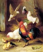 unknow artist Poultry 131 china oil painting reproduction