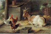 unknow artist poultry  162 china oil painting reproduction
