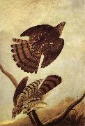 John James Audubon Stanley Hawk china oil painting reproduction