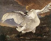 ASSELYN, Jan The Threatened Swan before 1652 china oil painting reproduction