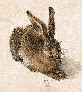 Albrecht Durer Young Hare china oil painting reproduction