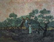 Vincent Van Gogh the olive pickers,saint remy,1889 china oil painting reproduction