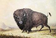 unknow artist George Catlin Bull Buffalo china oil painting reproduction