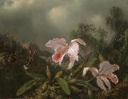 Martin Johnson Heade Jungle Orchids and Hummingbirds china oil painting reproduction