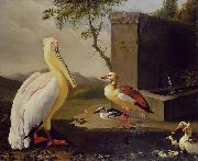 Adriaen Coorte Pelican and ducks in a mountain landscape or Oriental Birds oil