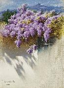 Antonio Mancini Wisteria in bloom oil painting picture wholesale