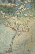 Vincent Van Gogh Blossoming Pear Tree (nn04) china oil painting reproduction