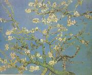 Vincent Van Gogh Blossoming Almond Tree (nn04) china oil painting reproduction