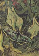 Vincent Van Gogh Death's-Head Moth (nn04) china oil painting reproduction