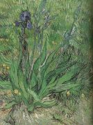 Vincent Van Gogh The Iris (nn04) china oil painting reproduction